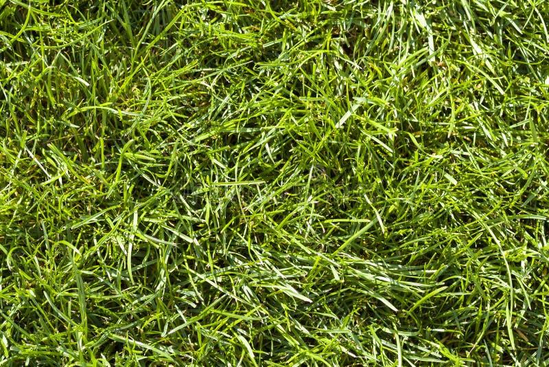 Zakończenie wyszczególniał tło świeża zielona jaskrawa trawa na pogodnym letnim dniu Pięknie skoszony gazon Ładny spoczynkowy ter fotografia royalty free