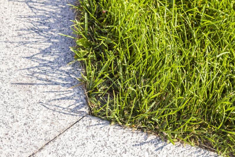 Zakończenie wyszczególniał wizerunek świeża zielona jaskrawa trawa na pogodnym letnim dniu Pięknie skoszony gazon Ładny spoczynko zdjęcia royalty free