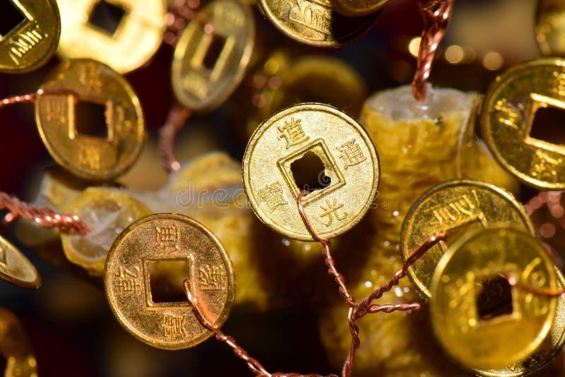 Zakończenie złocista moneta z znakami na pieniądze drzewie obraz stock