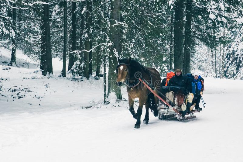 Zakopane, Polônia, o 10 de fevereiro de 2018, aproveita de um trenó tirado imagens de stock royalty free