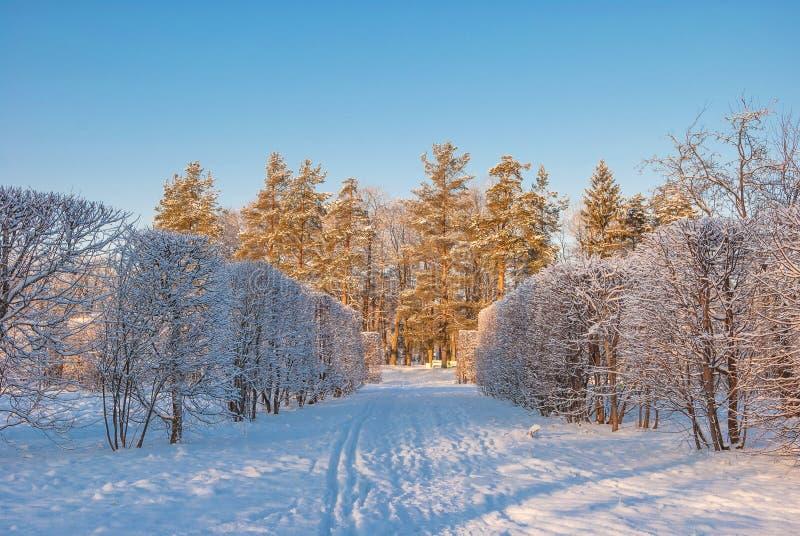 zakrywająca parka śniegu zima fotografia royalty free