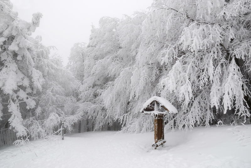 zakrywający śnieżni drzewa zdjęcia stock
