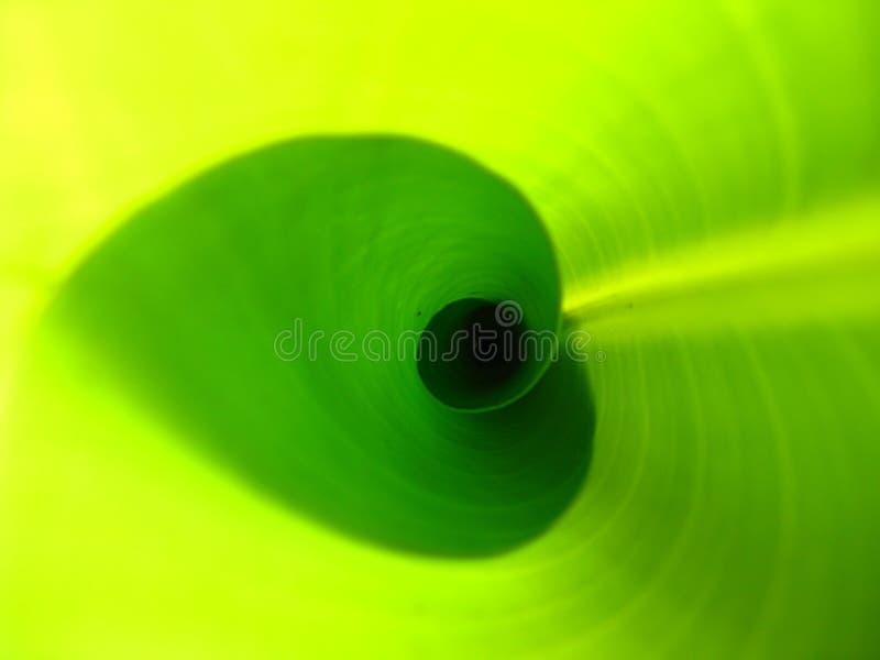 Zakrywający świeży bananowy liść strzelający from inside zdjęcia royalty free