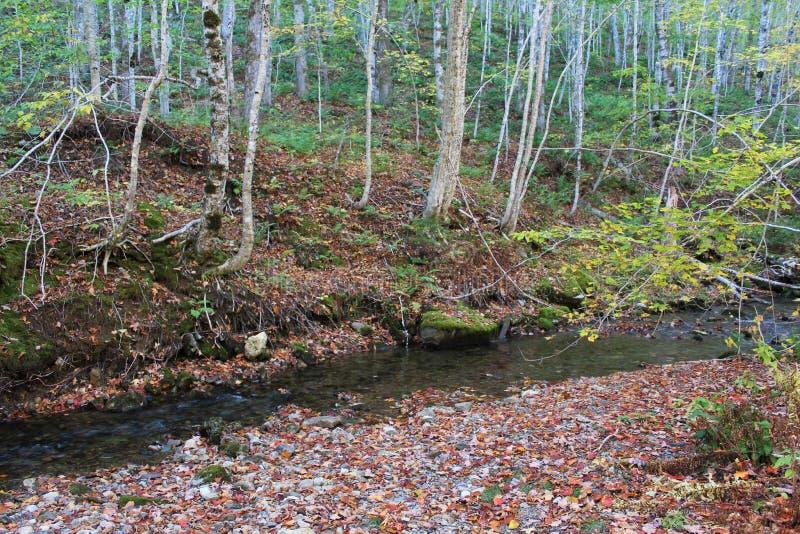 Zakrywający bank jasny halny strumień w wzgórzach wiejski przylądka bretończyk w spadku zdjęcia royalty free