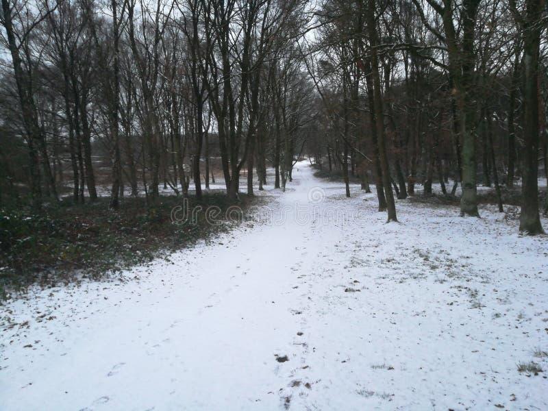 zakrywający lasowej ścieżki śnieg zdjęcie royalty free