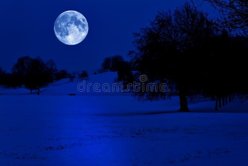 zakrywający pełny księżyc parka śnieg zdjęcie royalty free