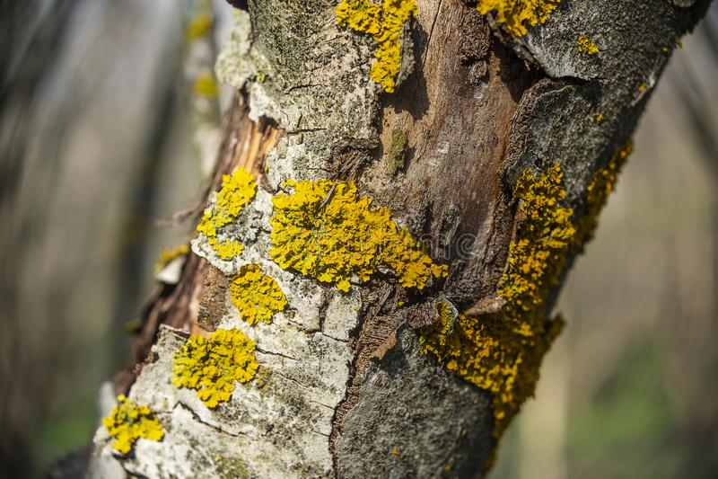 zakrywaj?ca Drzewna barkentyna zdjęcie stock