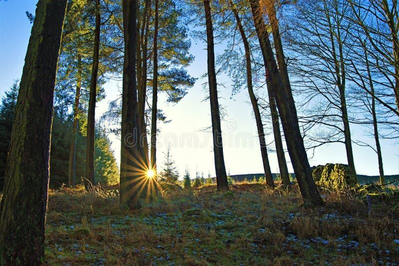 Zal van het Bosje op de benadering van de Snoeken van de Winstheuvel royalty-vrije stock afbeeldingen