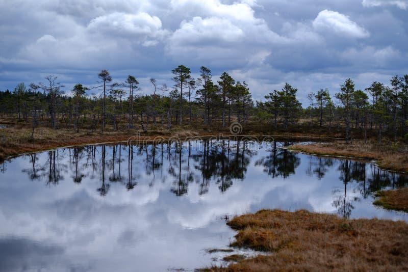 zalewa jeziora z odbiciami niebieskie niebo i chmury w Krajowym natura parku Kemeri w Latvia obrazy royalty free