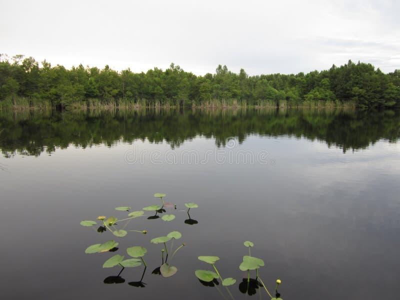 Zalewa jezioro z wodnymi lelujami i wciąż nawadnia zdjęcia stock
