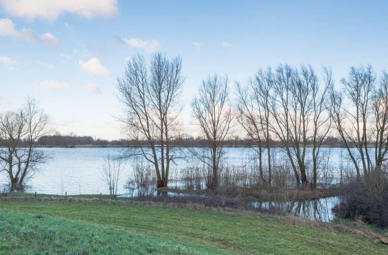 Zalewająca rzeka z nagimi drzewami obrazy royalty free