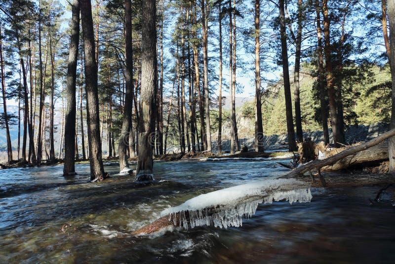 Zalewający brzeg rzeki zdjęcia stock