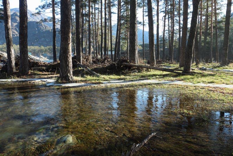 Zalewający brzeg rzeki obrazy stock