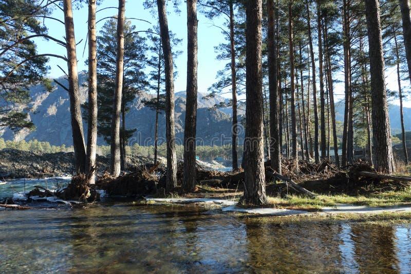 Zalewający brzeg rzeki obraz stock