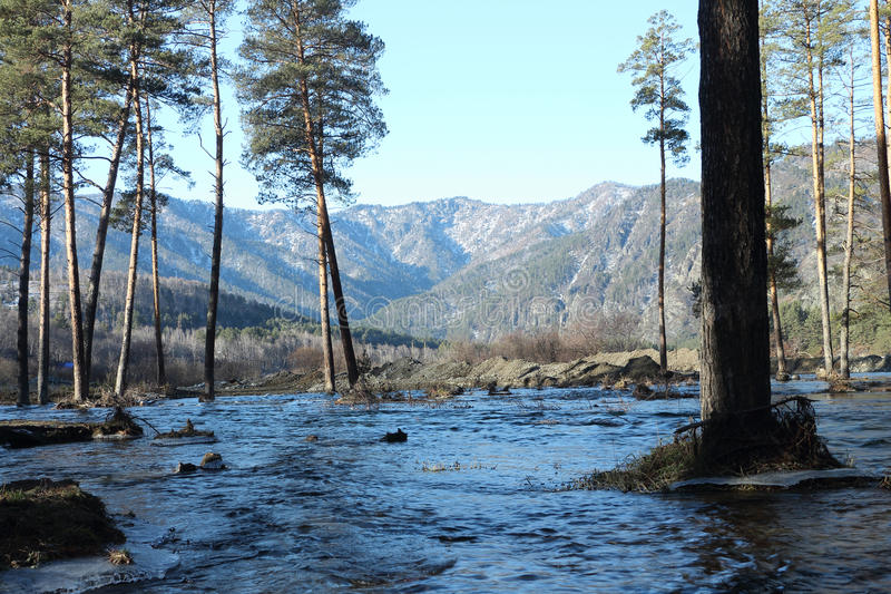 Zalewający brzeg rzeki fotografia stock