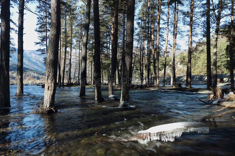 Zalewający brzeg rzeki zdjęcie royalty free