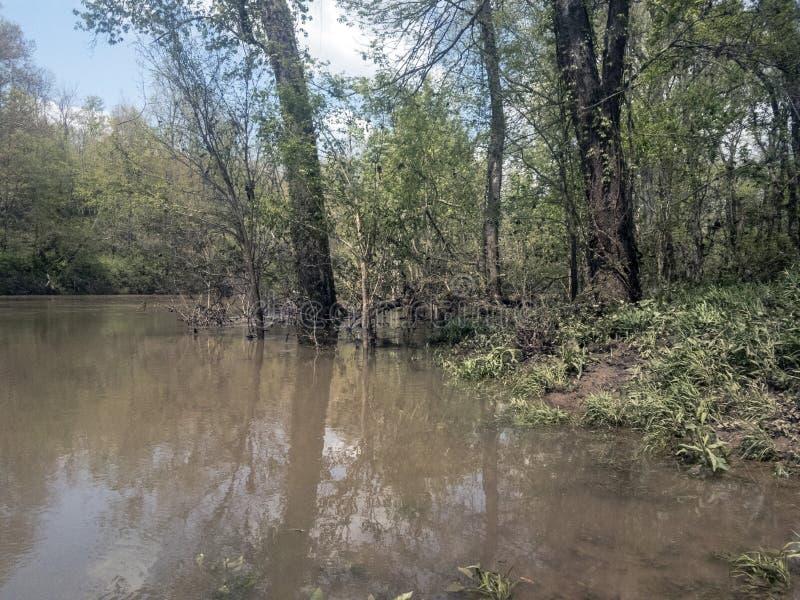 Zalewający brzeg rzeki stronniczo zanurzający drzewa zdjęcia royalty free