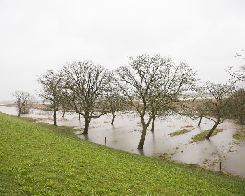 Zalewający drzewa i ziemia zbliżamy rzecznego Rhine w Holland obrazy stock