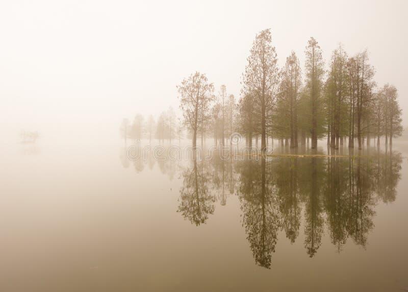 Zalewający drzewa w mgle przy wschodem słońca zdjęcie royalty free