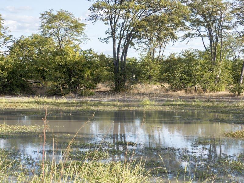 Zalewający krajobraz w Moremi parku narodowym, Botswana fotografia stock