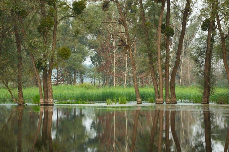 Zalewający lasu krajobraz obrazy stock