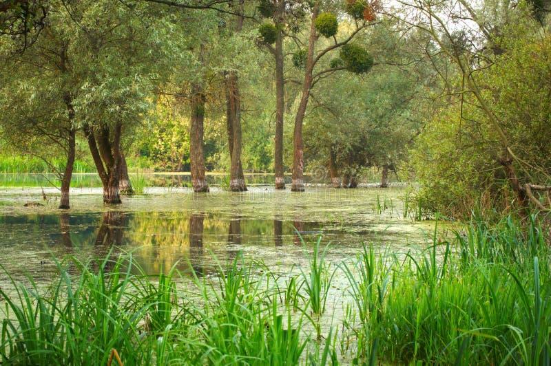Zalewający lasu krajobraz zdjęcia royalty free