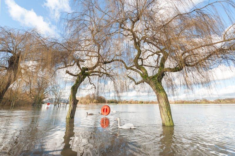 Zalewający parkland zdjęcie royalty free