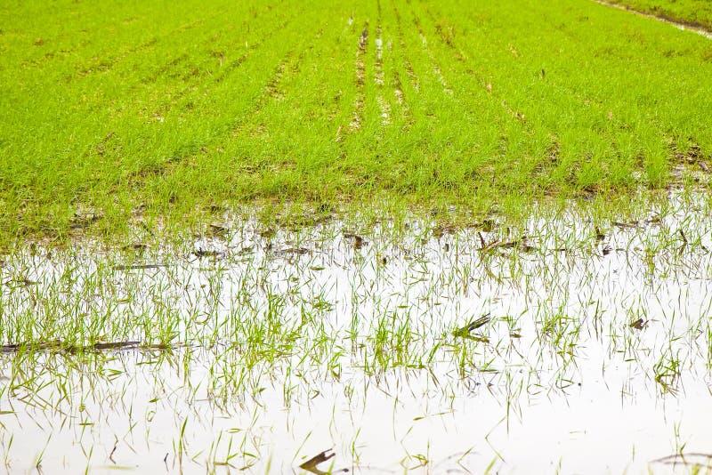Zalewający pola po ulewnego deszczu - wizerunek z kopii przestrzenią obraz royalty free