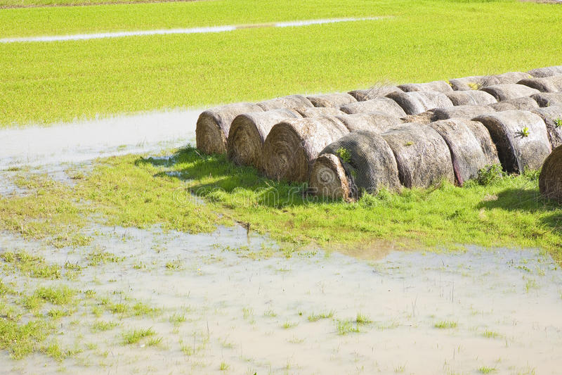 Zalewający pola z mokrymi siano belami po ulewnego deszczu obraz royalty free