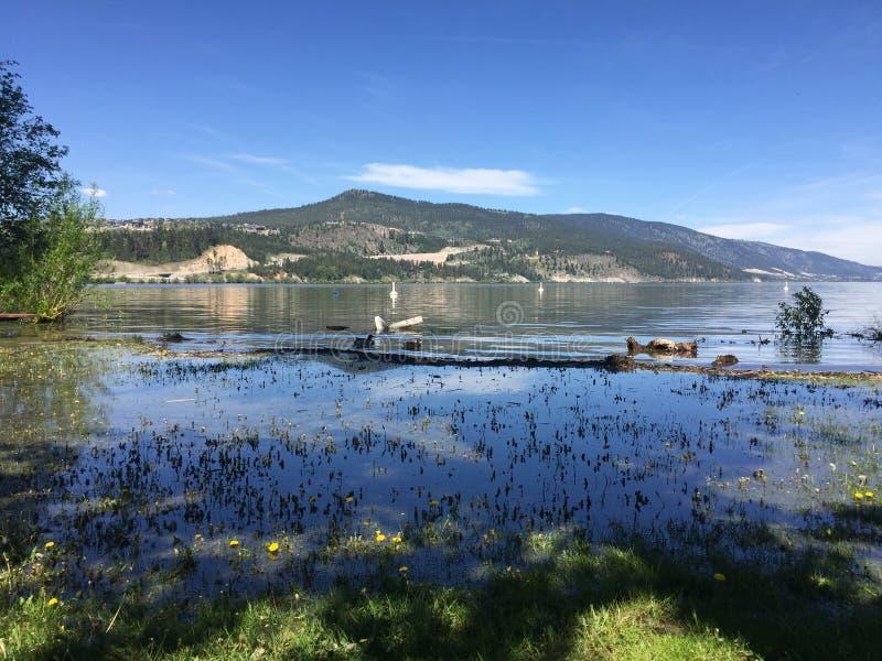 Zalewający pole z kaczkami i jezioro fotografia royalty free