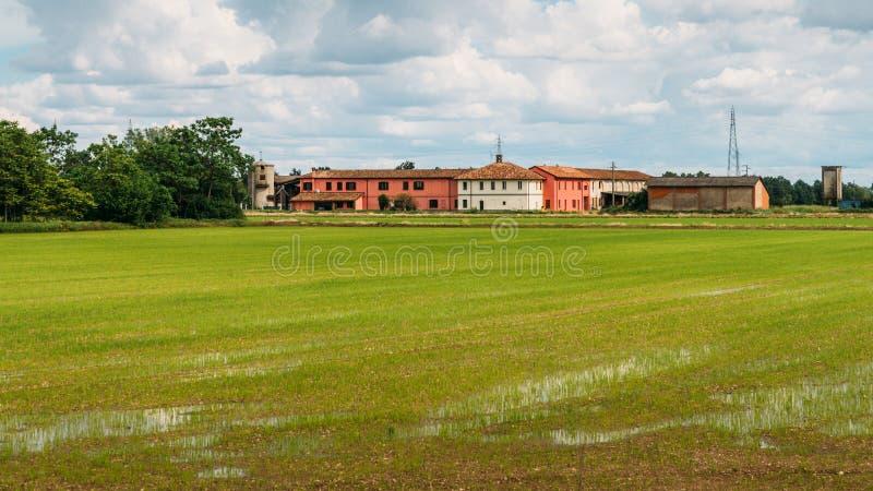 Zalewający Ryżowego irlandczyka pola w wiejskim Lombardy, Włochy zdjęcie royalty free
