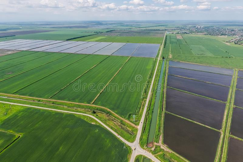 Zalewający ryżowi irlandczycy Agronomic metody rosnąć ryż obrazy royalty free