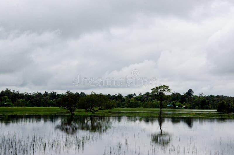 Zalewający ryżowy hodowlany rolnictwo Tajlandia fotografia royalty free