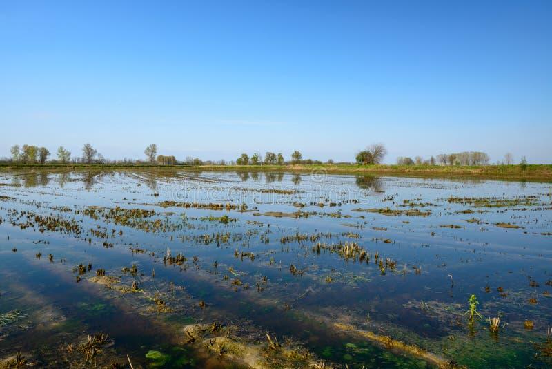Zalewający ryżu pole, Lomellina (Włochy) zdjęcia royalty free