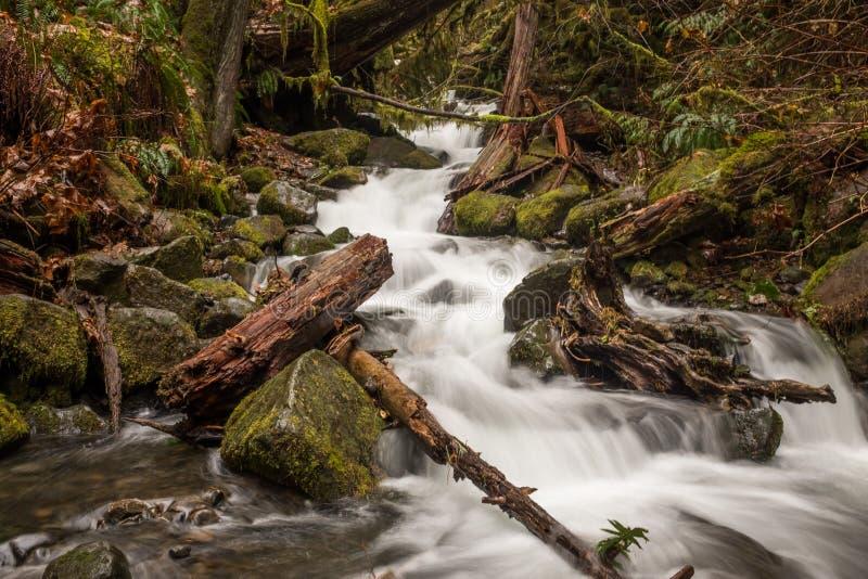 Zalewający strumienia post płynie nad skałami i drzewami na próbie w Kolumbia Rzecznym wąwozie, Oregon, usa na długim obrazy royalty free