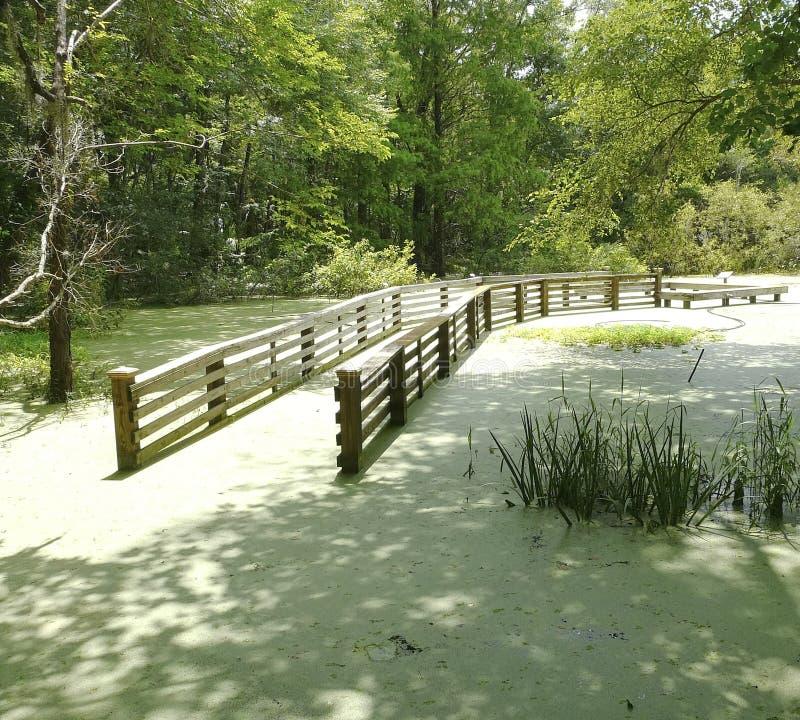 Zalewający woda ogródu Boardwalk Gainesville Floryda fotografia stock