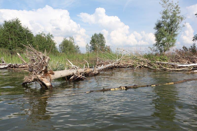 Zalewający wybrzeże wyspa przy Ob rzeką, Syberia obrazy stock