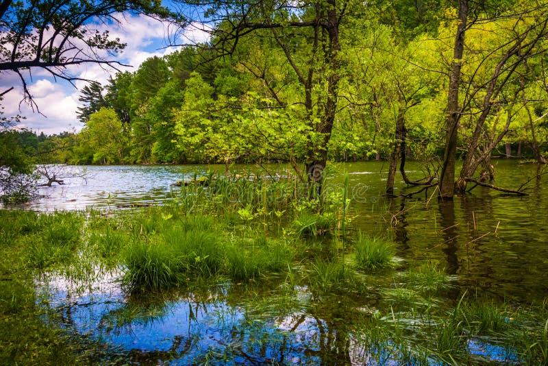 Zalewający wzdłuż brzeg Loch kruka rezerwuar w Baltimore, M zdjęcia royalty free