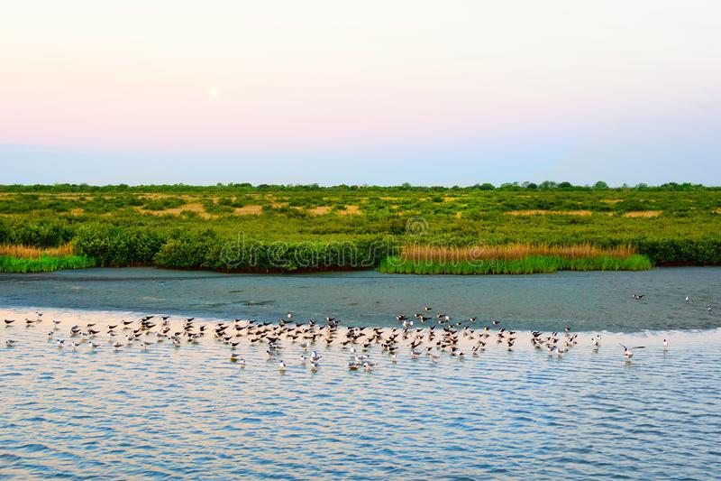 Zalewisko Lafourche, Luizjana zdjęcia stock