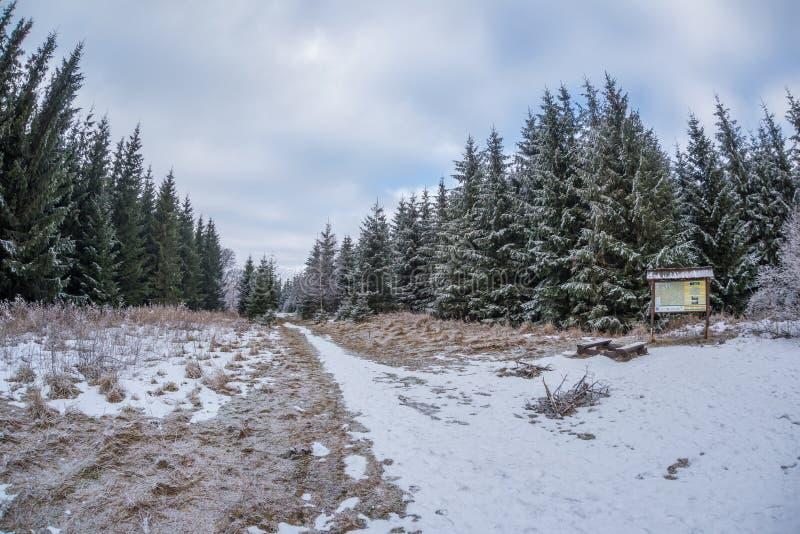 Zamarznięci drzewa, Świeży śnieg W Beskydy górach, rozdroża pod Travny górą, republika czech zdjęcia stock