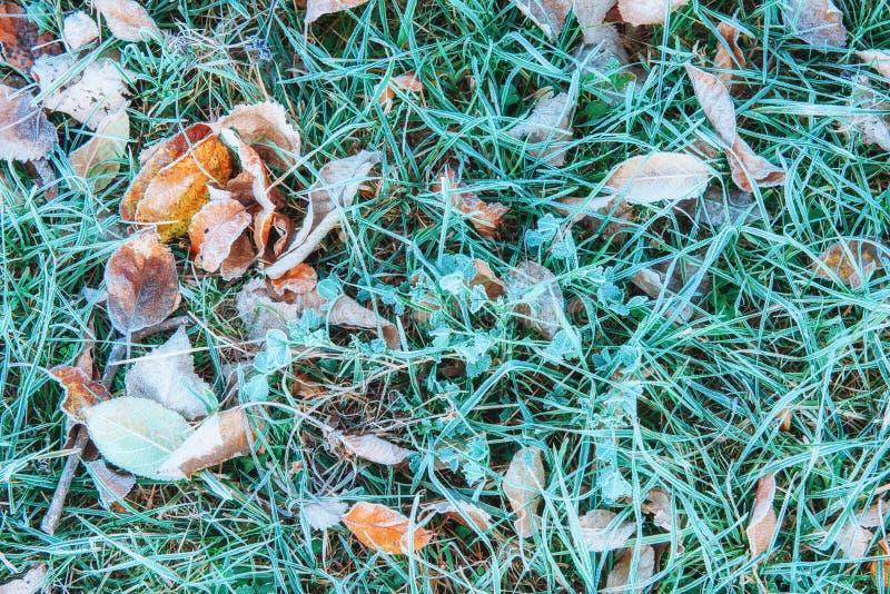 Zamarznięci jesień liście na zielonej trawie, zdjęcie stock