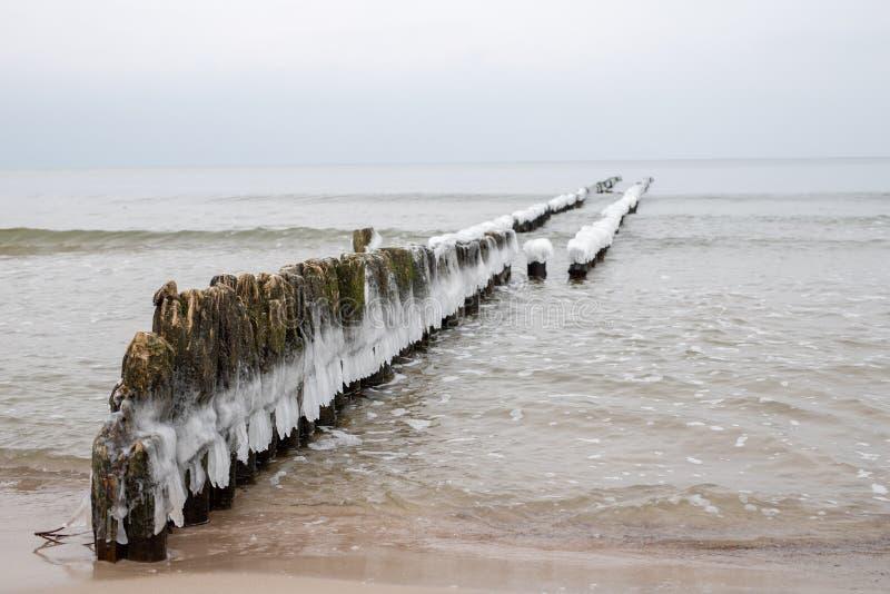 Zamarznięci słupy falochrony na dennego wybrzeża Lodowatych drewnianych słupach fotografia stock