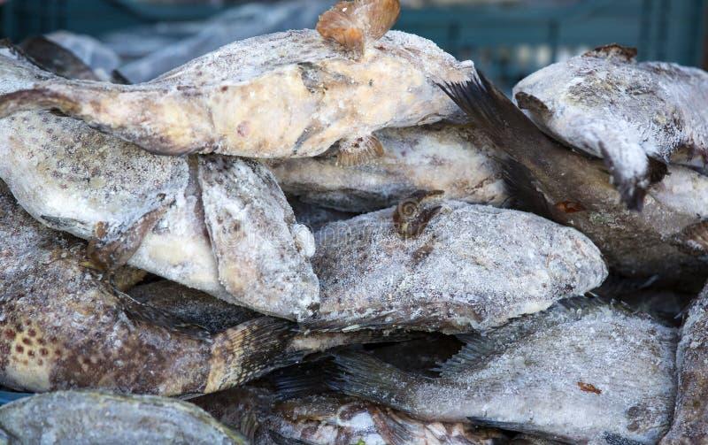 Zamarznięta dennej ryba makrela fotografia stock