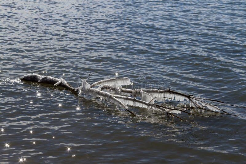 Zamarznięta Drzewna kończyna Unosi się Na Iskrzastym jeziorze obrazy stock