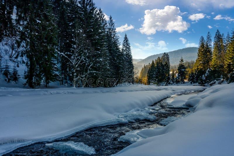 Zamarznięta halna rzeka w świerkowym lesie zdjęcie stock