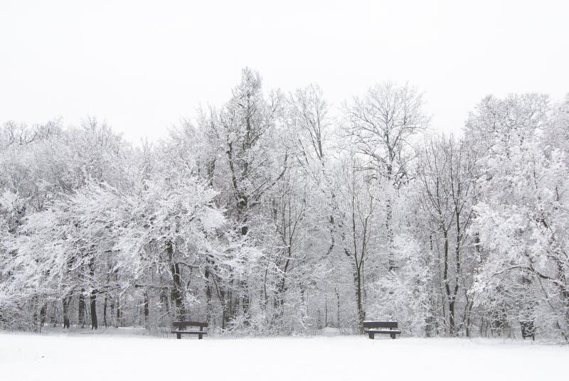 zamarznięta krajobrazowa zima obraz royalty free