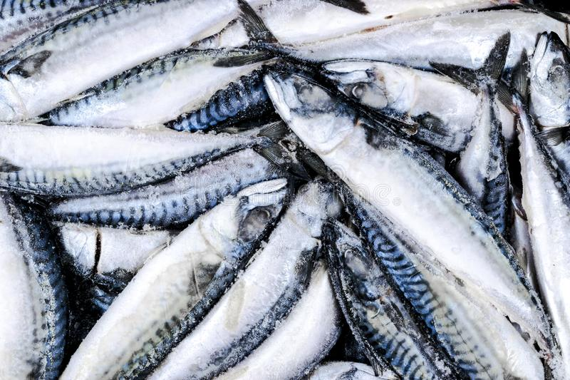 Zamarznięta makrela Zamarznięta grupa ryba lukrowa atlantycka ryba Macke obraz stock