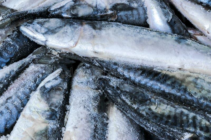 Zamarznięta makrela Zamarznięta grupa ryba lukrowa atlantycka ryba makrela Makrela wzór Skumbriowa tekstura obrazy stock