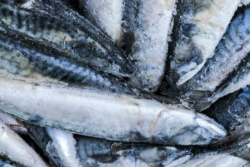 Zamarznięta makrela Zamarznięta grupa ryba lukrowa atlantycka ryba makrela Makrela wzór Skumbriowa tekstura fotografia stock