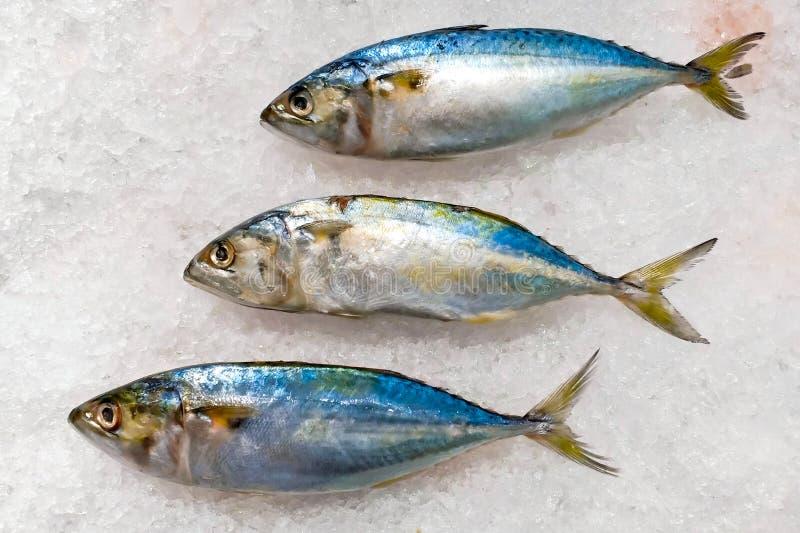 Zamarznięta makrela na kostka lodu używać dla gotować obrazy stock